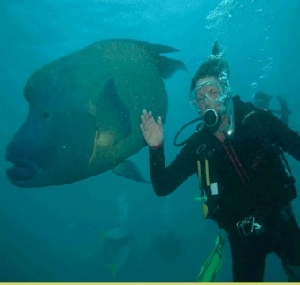 great.barrier.reef.swedish.diver